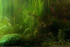 Horizontal d'Aguarium Photo libre de droits
