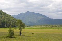 Horizontal d'Altai Image stock