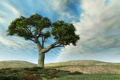 Horizontal d'arbre de banian Image stock