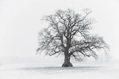 Horizontal d'arbre de l'hiver Photo libre de droits