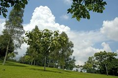 Horizontal d'arbres Photographie stock