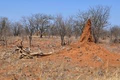 Horizontal d'Arican avec le termitarium photographie stock