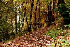 Horizontal d'automne Images libres de droits