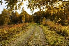 Horizontal d'automne. Photographie stock libre de droits