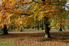 Horizontal d'automne. Images stock