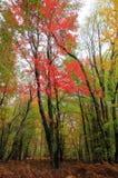 Horizontal d'automne images stock