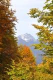 Horizontal d'automne Photo stock