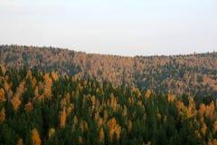 Horizontal d'automne Image stock