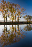 horizontal d'automne Photo stock