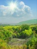 Horizontal d'automne avec la forêt colorée photos libres de droits