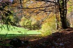 Horizontal d'automne dans les montagnes Photographie stock