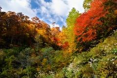 Horizontal d'automne de corest coloré Photographie stock libre de droits