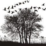 Horizontal d'automne et oies migratrices Illustration de Vecteur