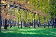Horizontal d'automne Scène d'automne Parc urbain photographie stock