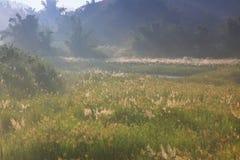 Horizontal d'herbe de regain et de barbelure photo libre de droits