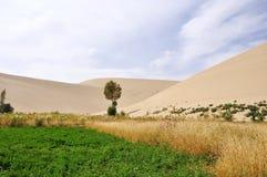 Horizontal d'oasis dans le désert photographie stock