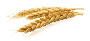 Horizontal d'oreilles de blé d'isolement sur le fond blanc Image libre de droits