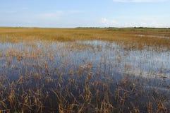 Horizontal dans les marais, la Floride photo stock