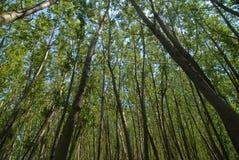 Horizontal dans une forêt Photos libres de droits