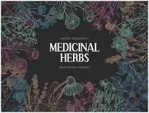Horizontal dark card template with vintage sketches of medicinal herbs and flowe Royalty Free Stock Photos