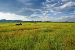 Horizontal de Bashang Photographie stock libre de droits