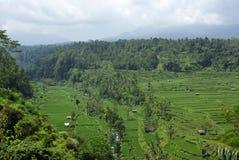 Horizontal de beaucoup de ricefields dans Bali photos libres de droits