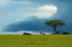 horizontal de beauté de l'Afrique Image libre de droits