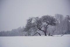 Horizontal de blanc de l'hiver Photos libres de droits