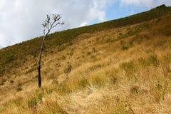Horizontal de côte d'herbe en automne Photo libre de droits