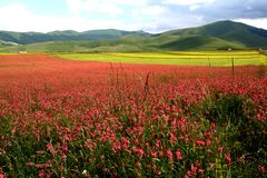Horizontal de Castelluccio /spring Photo libre de droits
