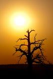 Horizontal de coucher du soleil photos libres de droits