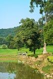 Horizontal de cour de golf Photo libre de droits