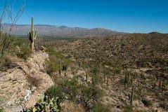 Horizontal de désert Photos stock