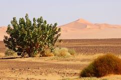 Horizontal de désert Photos libres de droits