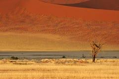Horizontal de désert Photo stock