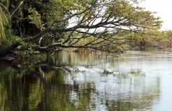Horizontal de delta d'Okavango. Le Botswana images libres de droits