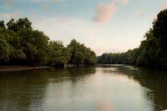 Horizontal de delta de Danube Photographie stock libre de droits