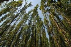 Horizontal de forêt Photos libres de droits