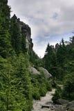 Horizontal de forêt Photo libre de droits