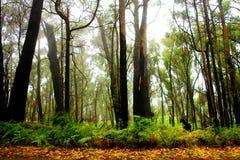 Horizontal de forêt Photos stock