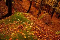 Horizontal de forêt de hêtre Images libres de droits