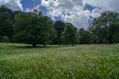 horizontal de forêt de jour ensoleillé Photo libre de droits