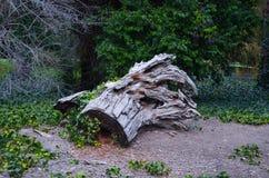 horizontal de forêt de jour ensoleillé Photo stock