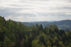 horizontal de forêt de jour ensoleillé photos libres de droits