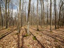 horizontal de forêt de jour ensoleillé Image libre de droits