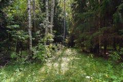 horizontal de forêt de jour ensoleillé photographie stock