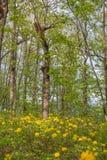 horizontal de forêt de jour ensoleillé Plantation de chêne Photos libres de droits
