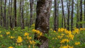 horizontal de forêt de jour ensoleillé Plantation de chêne Photos stock