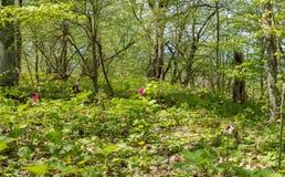 horizontal de forêt de jour ensoleillé Pré avec des fleurs et des arbres Foyer sélectif Photo libre de droits