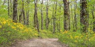 horizontal de forêt de jour ensoleillé Route dans une forêt de chêne Images stock
